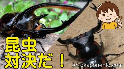 ハンター フーガ 蜂